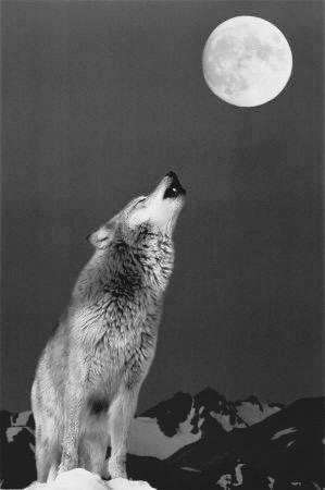 il lupo solitario cerca di fare tutto da sé, finché ce la fa.
